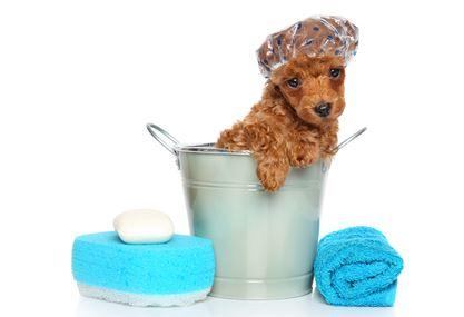 Bathing Pets