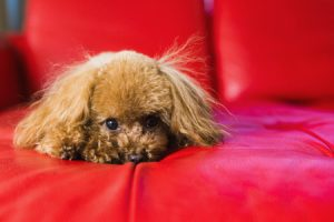 Can Dogs Sense Earthquakes?