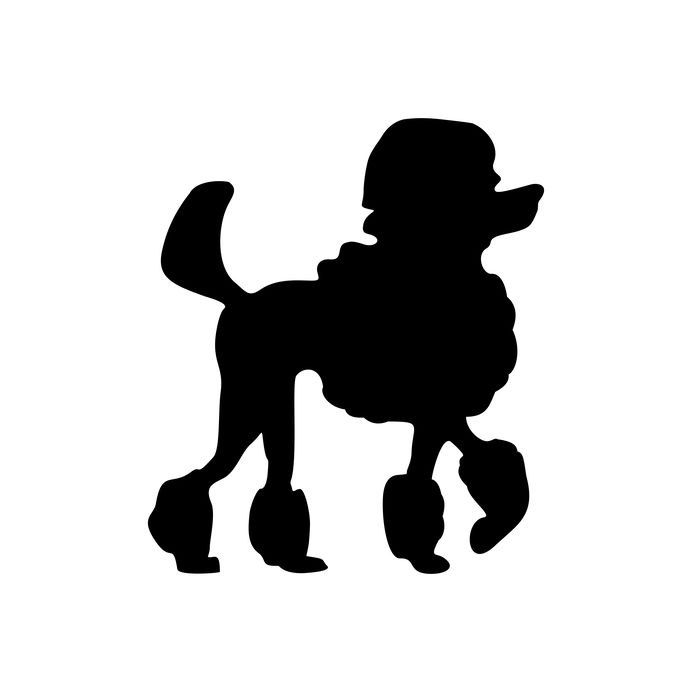 Poodle icon. Dog standing silhouette. Vector black flat illustration isolated on white background.