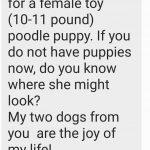 Poodle Reviews
