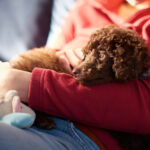 Child Holding Poodle Puppy